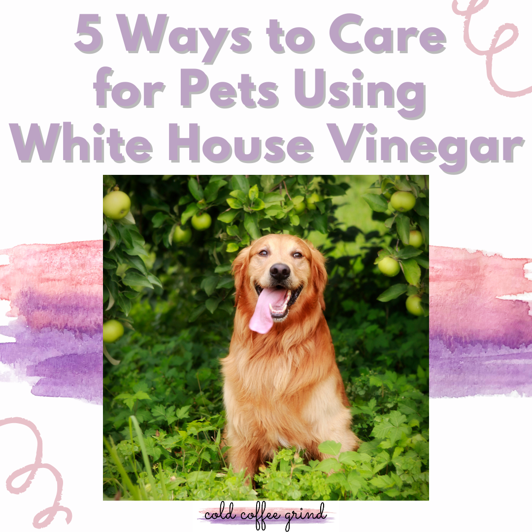 5 Ways to Care for Pets